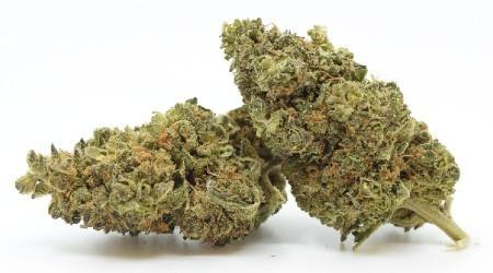 Premium Indoor CBD Flowers CBD <7% THC<0.2% 100g 250g 500g 1kg 5kg