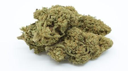 Premium Greenhouse CBD Flowers 2020 CBD <7% THC <0.2% 100g 250g 500g 1kg 5kg